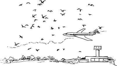 birdsatairports.jpg