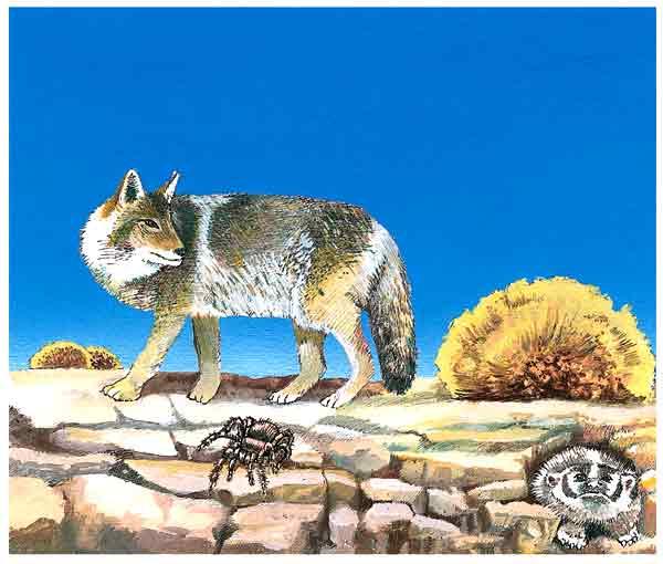 coyote1.jpg