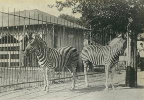 old-zoo2.jpg